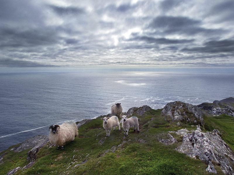 Sheeps Head, West Cork