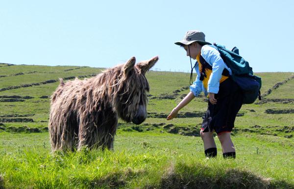 just-back-from-ireland-donkey