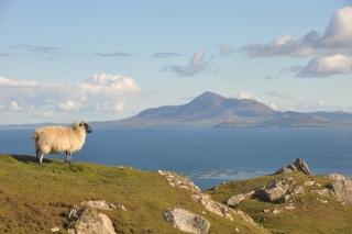 Irelands sacred peak; Croagh Patrick from Clare Island