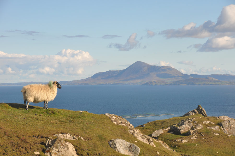 Irelands sacred peak; Croagh Patrick from Clare Island