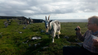 The only other beings encountered on a day among the stones of Aran