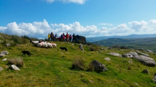 The thrill of encountering a shepherd, his flock and his working dogs