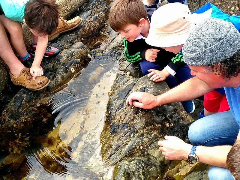 Explore Atlantic rock pools